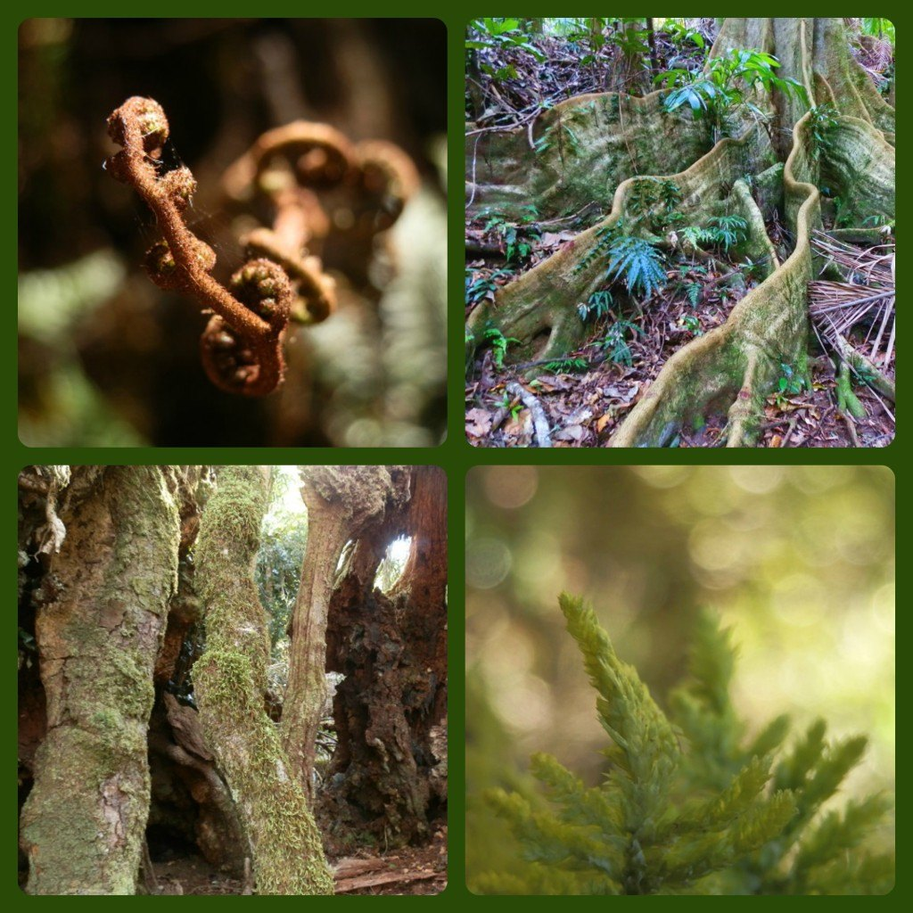 Trees Ferns Moss
