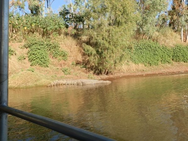 Crocodile from Cruise Boat, Victoria River, via Timber Creek