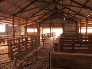 Inside the old Woolshed, Mt Wood Station, Sturt National Park