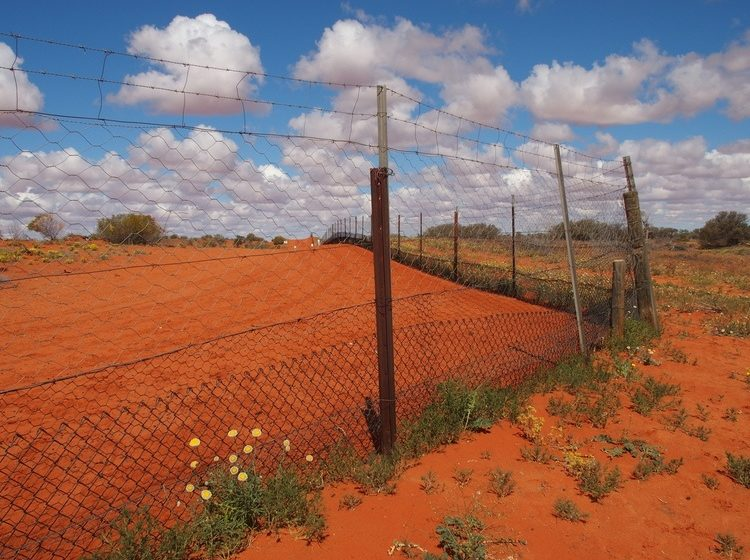 Dingo Fence at Cameron Corner, New South Wales
