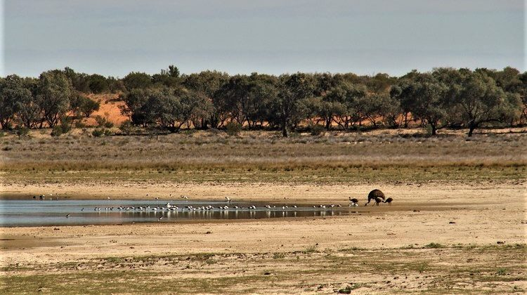 Cobham Lake with Emus, Silver City Highway