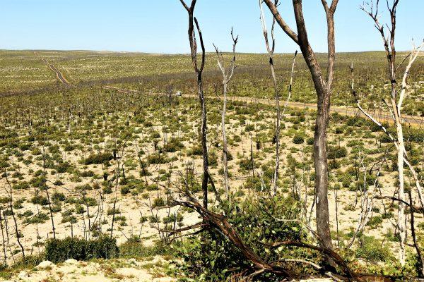 Bunker Hill Lookout, Flinders Chase National Park, Kangaroo Island